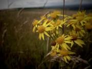Sussex wildflowers